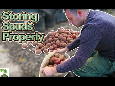Storing Potatoes Long Term  - Save Your Potato Harvest