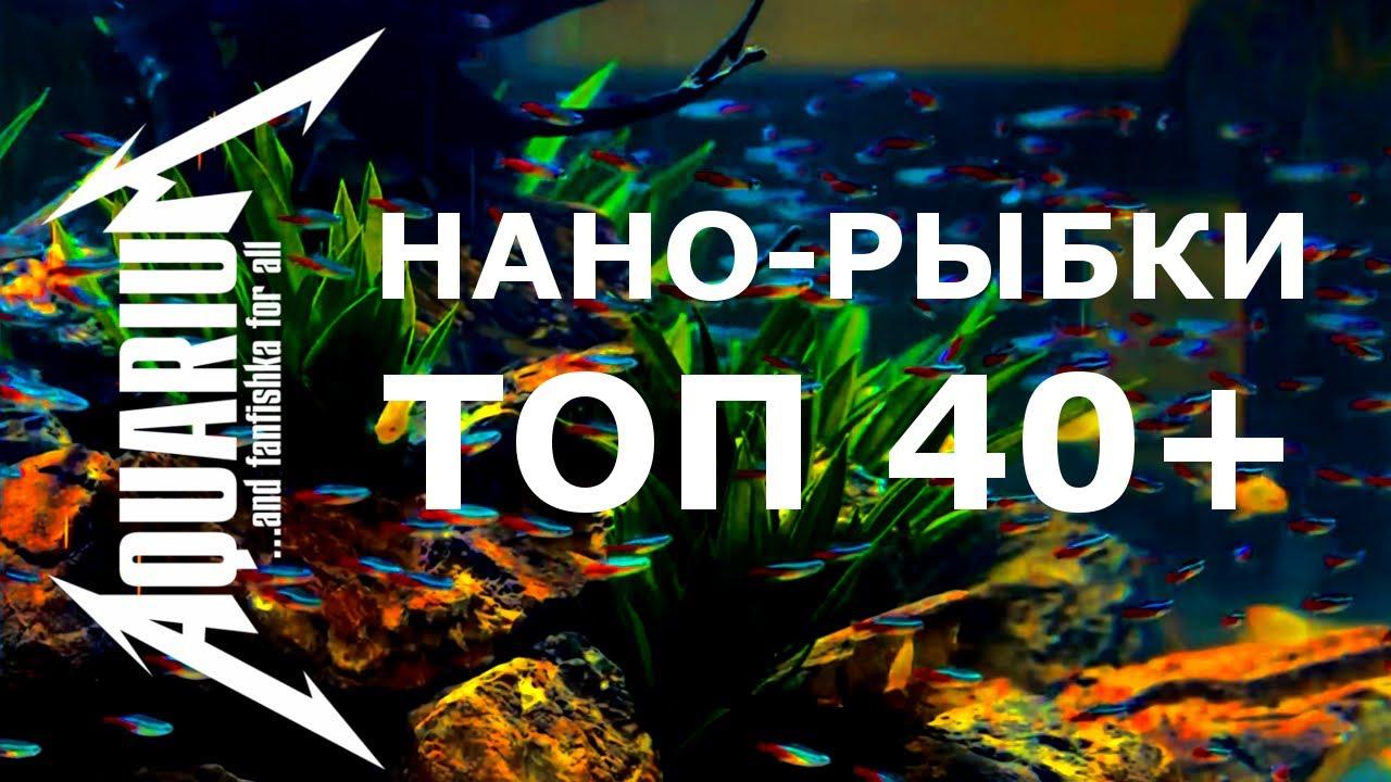 Самые маленькие аквариумные рыбки ТОП 40+