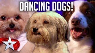DANCING DOGS! | Britain's Got Talent