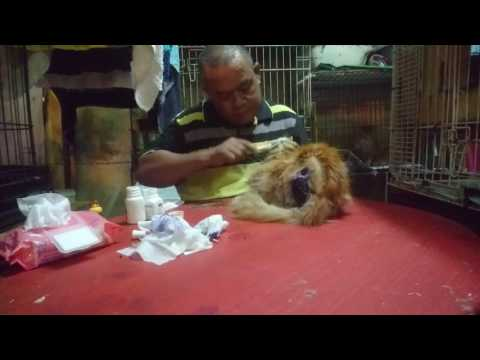 Treatment for sick Cats