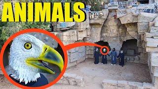 Hayvan İnsanları gördüğünüzde, size yaklaşmalarına izin vermeyin! Olabildiğince HIZLI kaç!