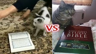 Experiment with 5 Cats Full HD Video | Cats Will Not Walk on The Quran,