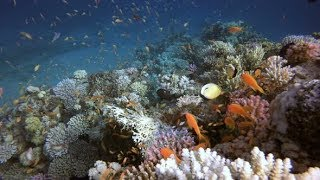 Beautiful Tropical Coral Garden | Stock Footage - Videohive