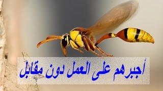 أغرب حالات العبودية عند الحشرات