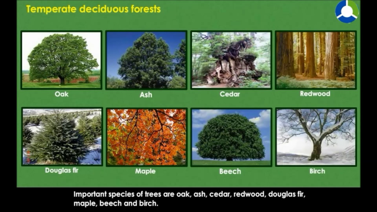 animals and plants have special adaptations to cope with these yearly changes. Temperate Deciduous Forests Natural Vegetation And Wild Life Cbse Grade 7 Geography Youtube