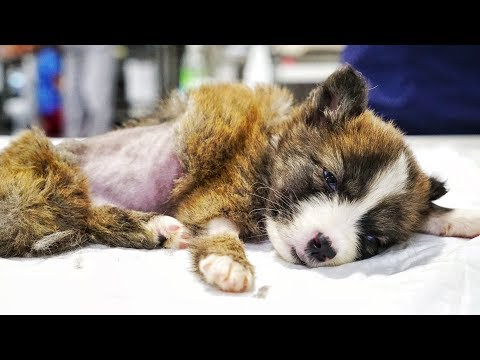Amazing puppy found in a garbage container is fighting  back!
