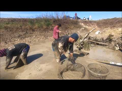 Catching Fish with Bare hands and Using net