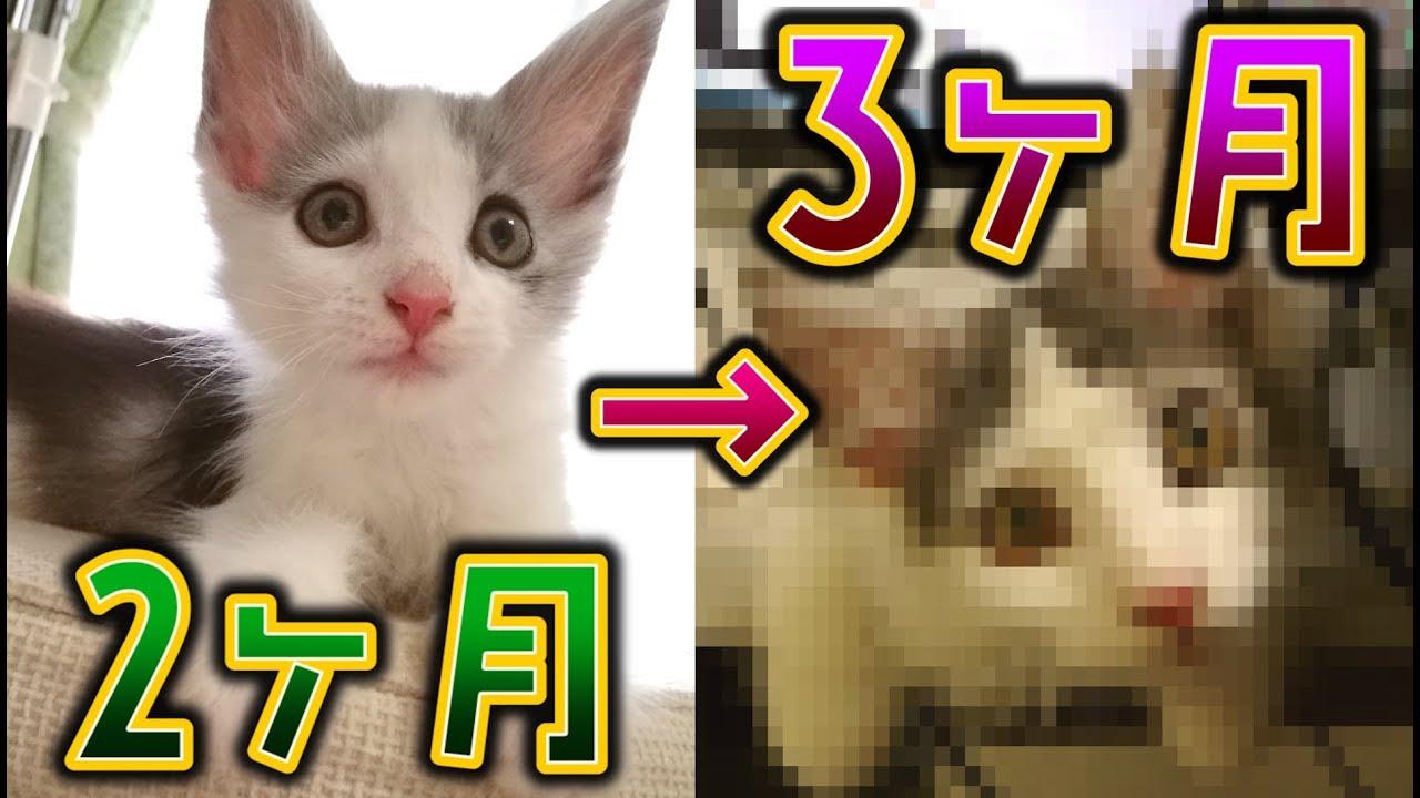 2 体重 子猫 ヶ月