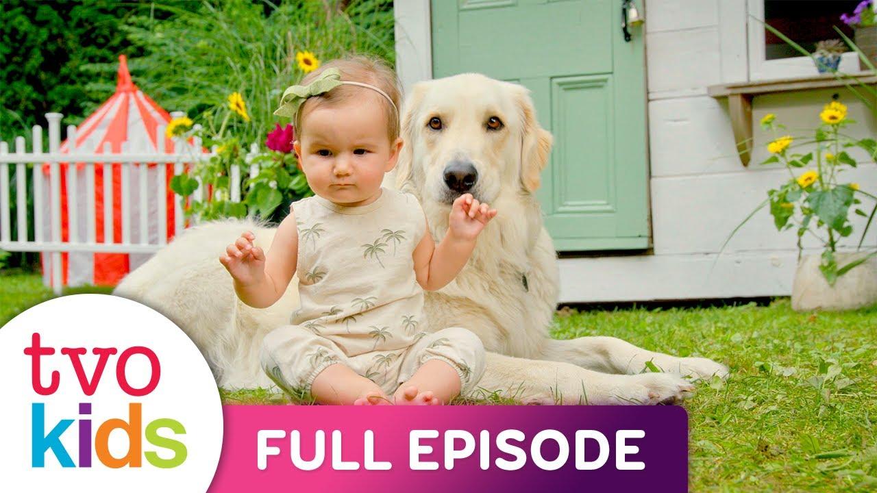Baby Baby - Puppies - Full Episode