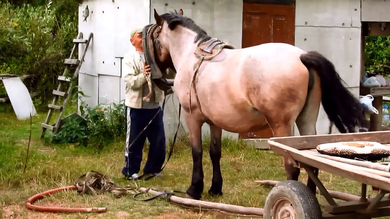 How to harness a horse 22