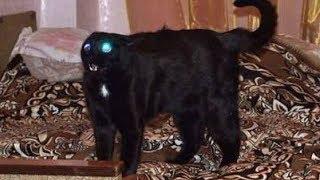 Ни в коем случае не заводите этих кошек! Самые злые породы кошек