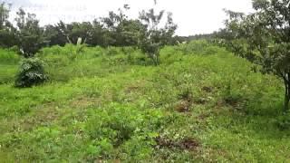 4.5 acres agri-farm land for sale - Part-1