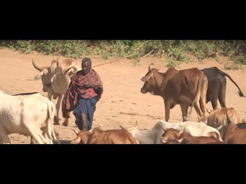 Climate action in Tanzania - Services for food security, العربية