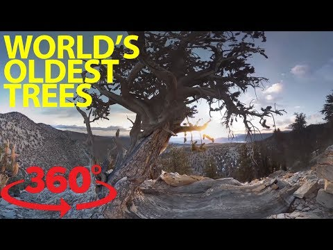Step into an ancient forest in 360