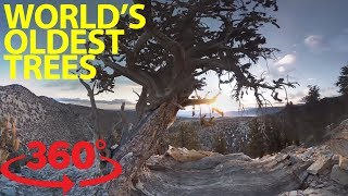 Step into an ancient forest in 360 thumbnail