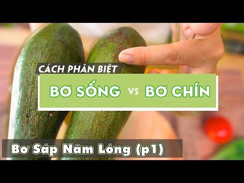 CÁCH PHÂN BIỆT BƠ SỐNG VÀ BƠ CHÍN - PHẦN 1| Opanick Fruit
