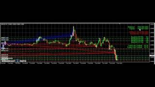 Forex Software make $1000 in 6 hours
