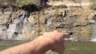 Amazing River Fossil hunting trip March 2016 with Mosasaur Shark Mastadon