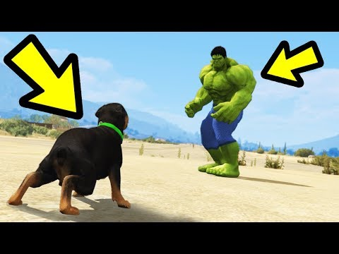 GTA 5 - Chop vs. Hulk! (Who Wins?)