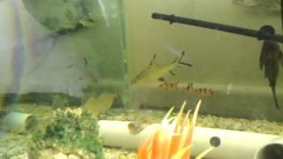 8ft fish tank Oscars Saratoga discuss