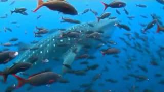 Galapagos Island by prismash