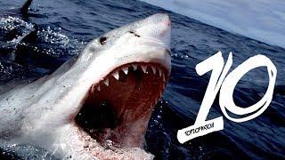 Najgroźniejsze rekiny świata!