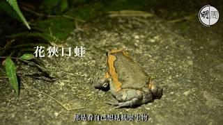【毒人系列】夜行香港:約會青蛙的男人
