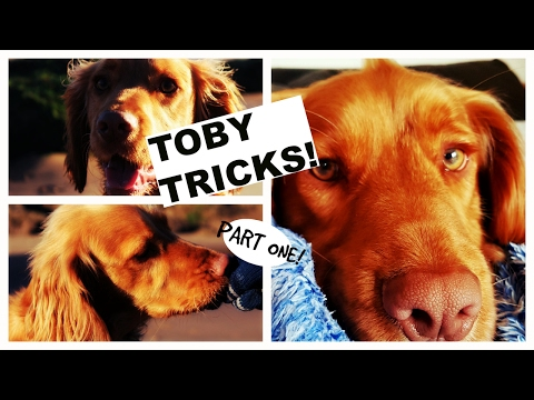 9 Toby Tricks!|Part 1