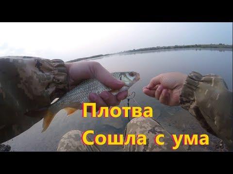 Плотва Сошла с ума , Федоровка 27.07.2019 год Со стороны Церкви .