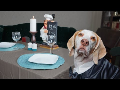 Dog Makes Romantic Dinner for Two: Funny Dogs Maymo & Penny