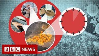 Coronavirus: More myths to ignore - BBC News