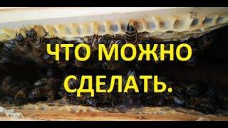 что можно делать с пчелами в зимнее время