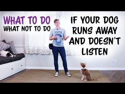 2 Cases DOG BODY LANGUAGE can be MISINTERPRETED - Dog Training - YouTube