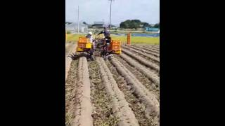 Kamote harvest pinoy farmer dto s japan