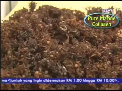 Khasiat Rumpai Laut/Ibu Kolagen (Pure Marine Collagen) Panorama TV1