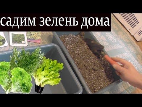 Как посадить зелень дома / Садим: Кинзу, Укроп, Салат
