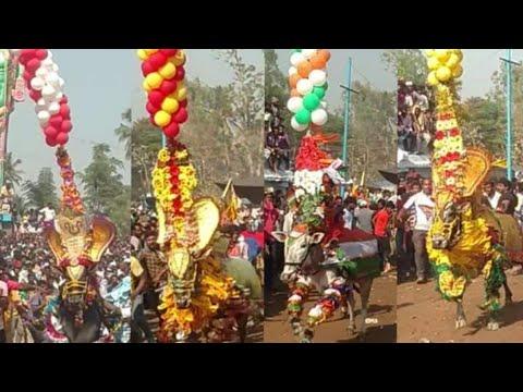 Dasanapura Jallikattu 13/4/19_Dasanapuram Jallikattu_Hori Habba_at (Krishnagiri).....2019
