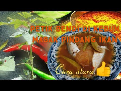 petik-bendi-di-kebun-masak-pindang-ikan- -cara-utara-#pindangikanutara-#cooking-#resepimudah