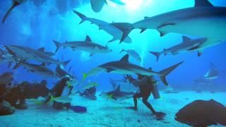La nature de l'homme : un plaidoyer pour les requins