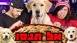 אתגר בונזו - תצליחו ללעוס אוכל של כלב??