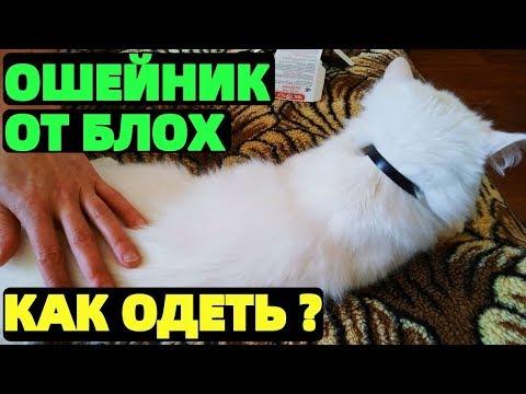 Ошейник от блох для кошки как одеть ?