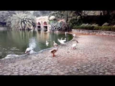 Walking in Lodhi Garden, New Delhi