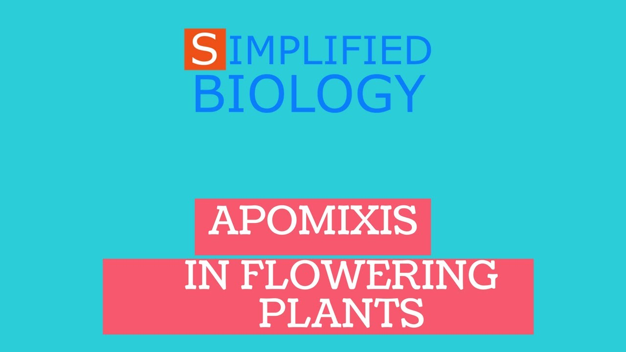 Difference between apomixis and polyembryony asexual reproduction