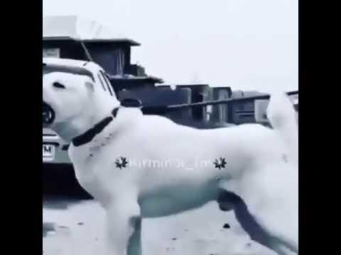 Mirami - Соколи (Lyric Video) // @Mirami