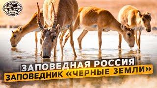 Заповедная Россия. Заповедник «Черные земли» | @Русское географическое общество