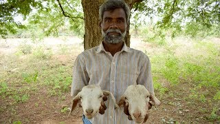Village Style Cooking Two Goat Head Fry On Clay Pot | Wild Food