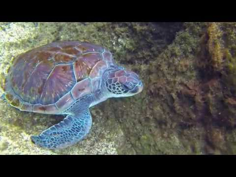 Swimming in the Cayman Turtle farm with GoPro cam HD