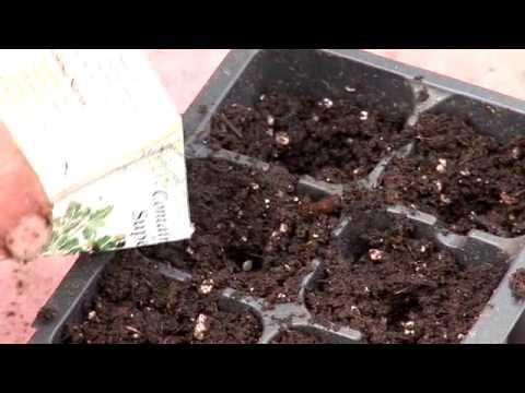 Vegetable Seed Starting Youtube