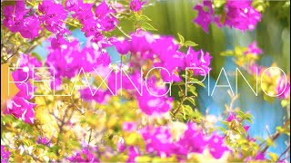 Relaxing Piano Music 🍀 Study Piano Music 🍀 Piano  For Stress Relief 🍀 Music For Studing