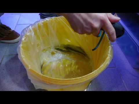 Fische richtig ins Aquarium einsetzen/TAX(#62)